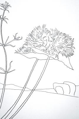 Landscape line study