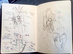 Sketchbook pp.5-6